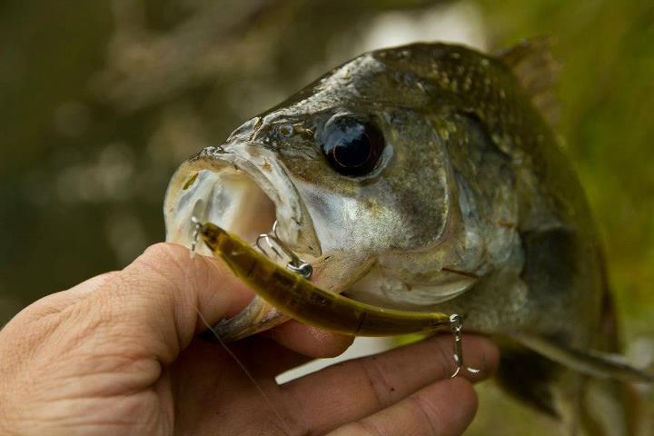 Freshwater Fishing Tactics by Jason Garner - Tackle Land