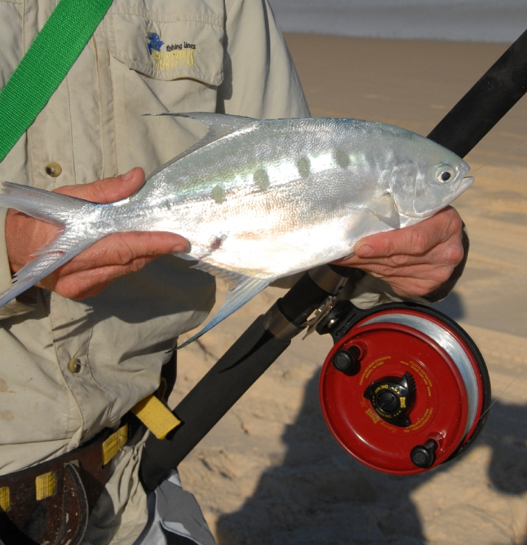Beach Fishing Tips by Alvey Reels Australia - Tackle Land