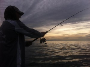 Sunrise Snapper Fishing Gold