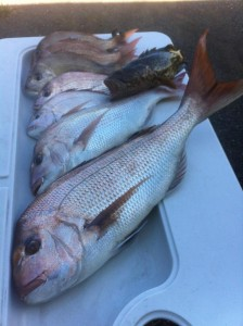 Mates & Snapper Fishing